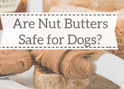 Are Nut Butters Safe for Dogs